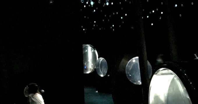 幻想的なクラゲの展示
